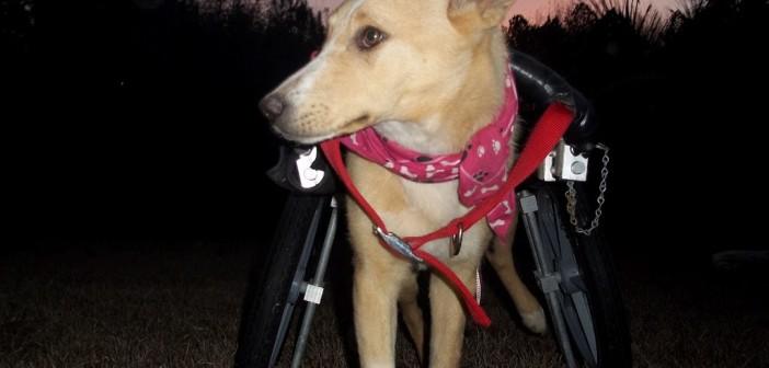 mercy-wheelchair