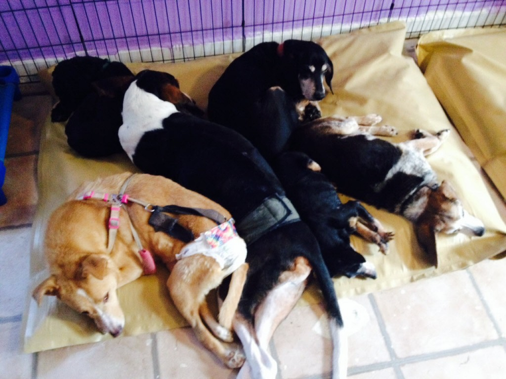 special needs dogs on dog bed pileup