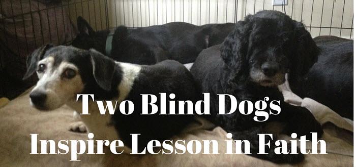 two blind dogs inspire lesson in faith www.walkbyfaithministry.com