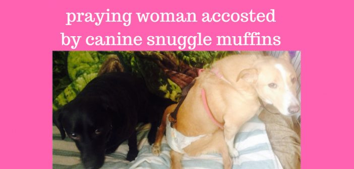 praying woman accosted by canine snuggle muffins