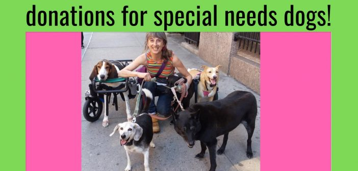 donations for special needs dogs