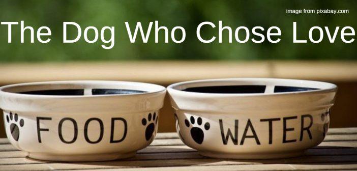 dog who chose love
