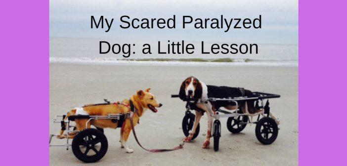 my scared paralyzed dog