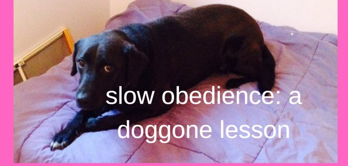 slow obedience a doggone lesson