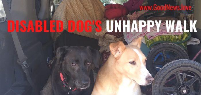 DISABLED DOG UNHAPPY WALK